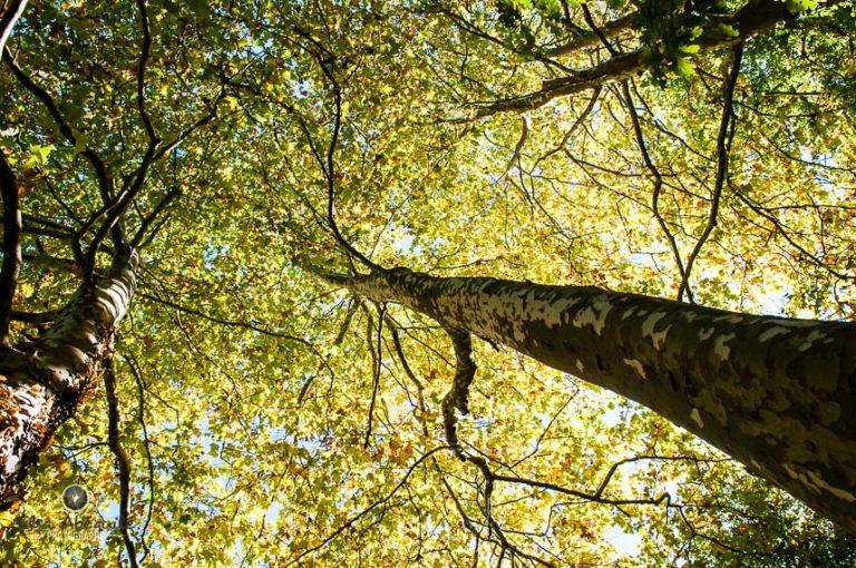 Vue de dessous des feuilles d'un arbre, exprimant la gratitude face à la beauté de la nature.